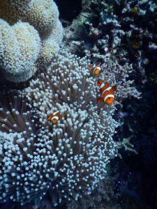 underwater view taken by dedika marlon