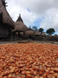 Penduduk di Desa Bena senang nyirih pinang. Jadi banyak pinang yang dijemur. Selain pinang ada kopi juga.